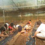 Organics farm (175)